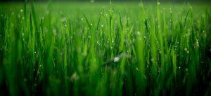 pelouse-amenagement-jardin
